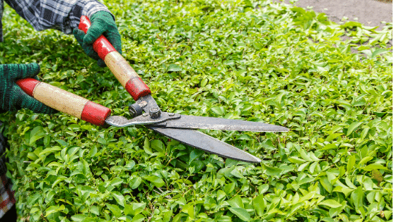How many calories can you burn gardening?